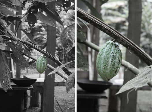 From Cacao to Confection How Chocolate is Made